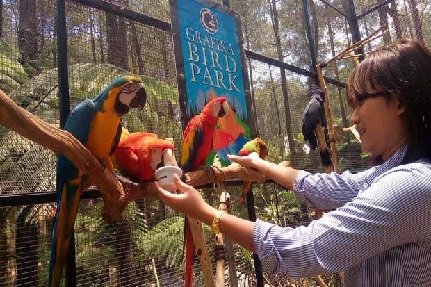 Grafika Bird Park, Wisata Mini Zoo di Kawasan Sejuk Bandung Barat
